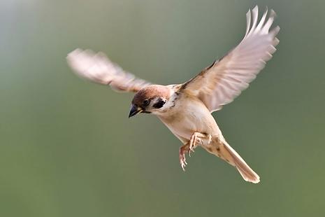 B_sparrow.jpg